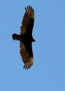 Gliding Overhead