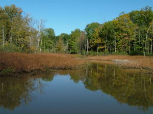 Rocky River Reservation Wetland