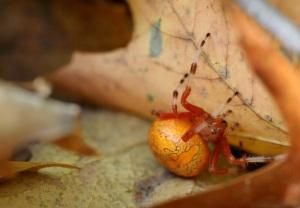 Spider Hideaway