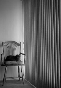 Tasha's Chair