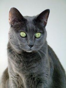 Photo: Tasha, cat. Photo by James Guilford.