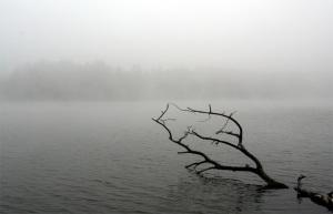 Fallen Tree, Foggy Morning
