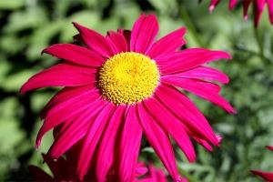 Flower Over