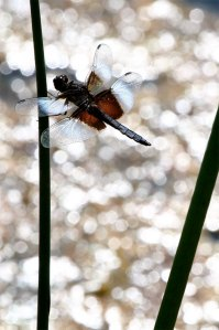 Dragonfly Diamonds