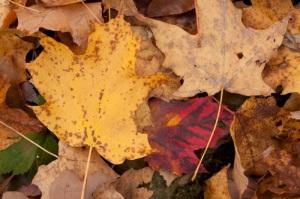 Leaf Confetti