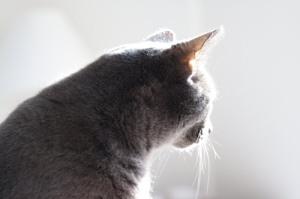 Tasha Profile