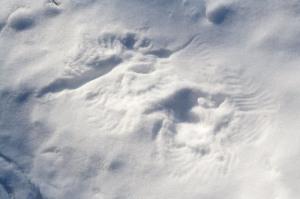 Snow-Wing