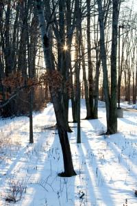Snow-Sun-Trees