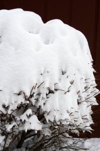 Snowy Funnels