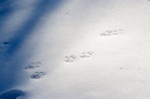 Arctic Tracks