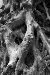 Sculpted Roots