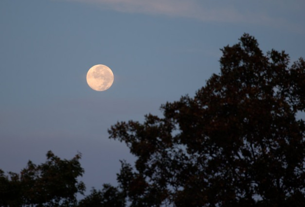 Photo: The Moon about to disappear in the west. Photo by James Guilford.