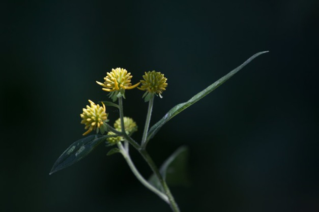 Photo: A flowering plant poses as if in mid-dance. Photo by James Guilford.