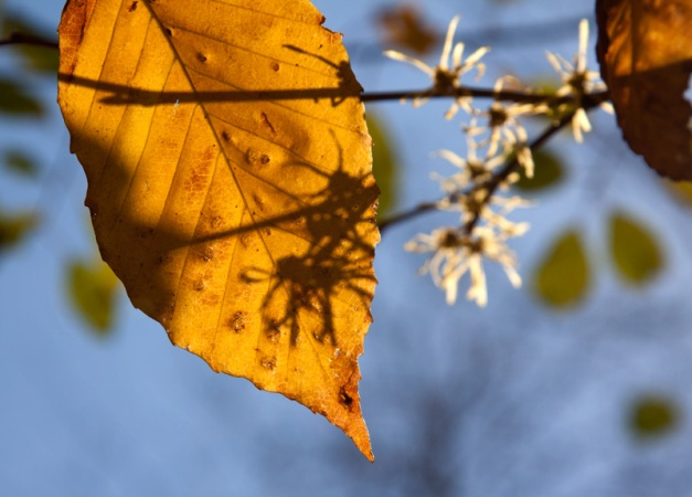 Photo: Shadows fall across an autumn leaf. Photo by James Guilford.