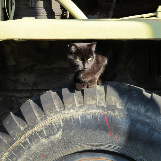 Photo: Black cat perches on the tire of a large vehicle. Photo by James Guilford.