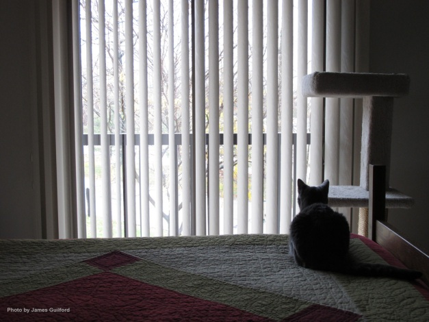 Photo: Cat on bed looking out windows. Photo by James Guilford.