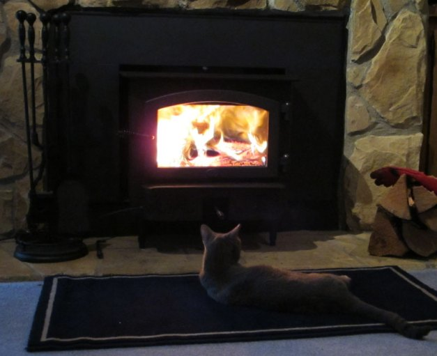 Photo: The first fire burns brightly as cat basks in its glow.