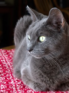 Photo: Tasha the cat. Photo by James Guilford.