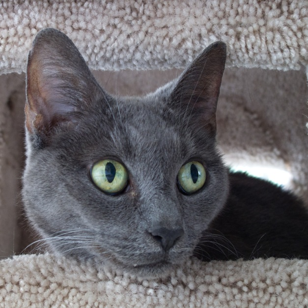 "Photo: Tasha the cat peering from the window of her ""house"". Photo by James Guilford."