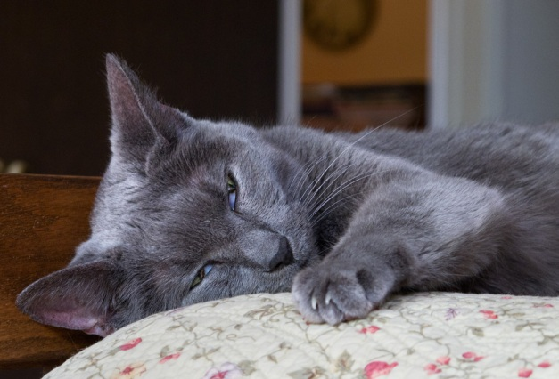 Photo: Cat sleeping on bed. Photo by James Guilford.