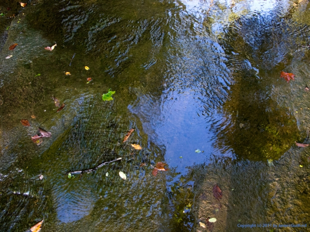 Photograph: Morning light, water, and stone in a shallow stream. Photo by James Guilford.