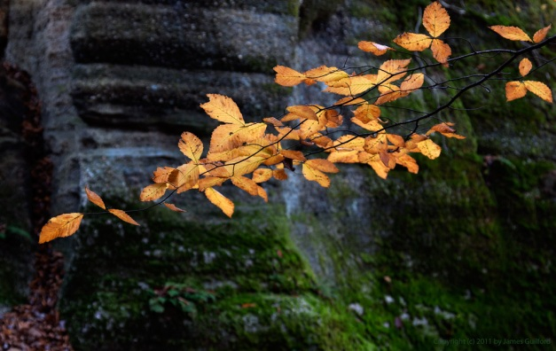Photo: Colored autumn leaves contrasted against dark, moss-covered rock. Photo by James Guilford.