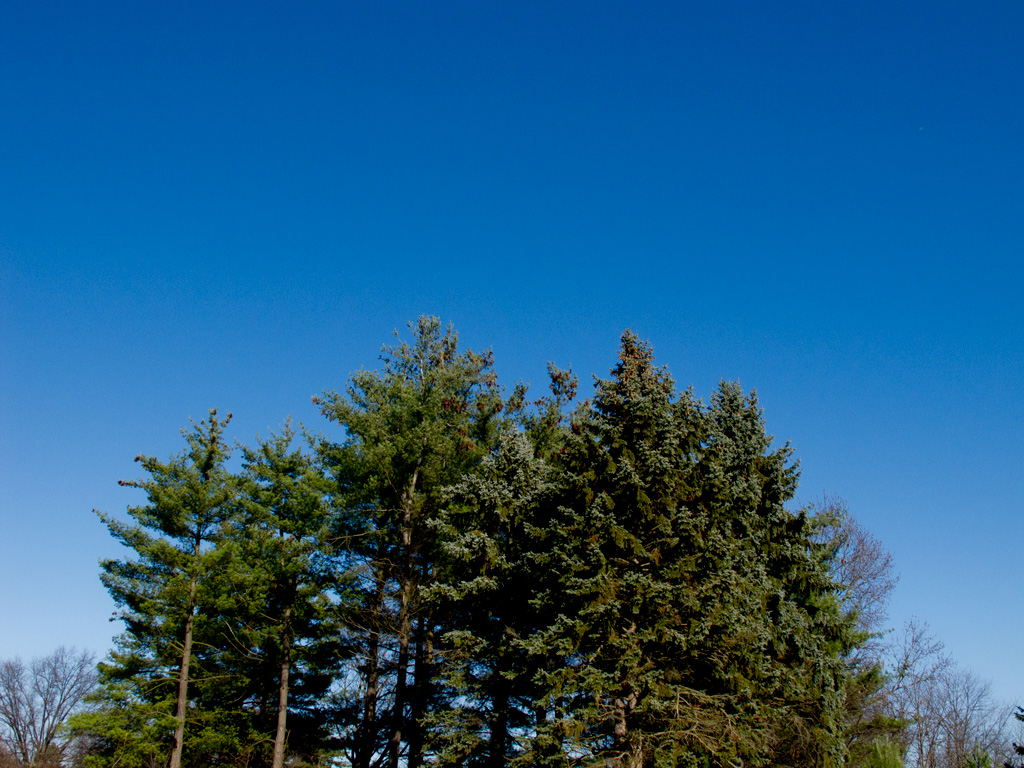 Photo: Gorgeous blue sky over dark green trees. Photo by James Guilford.