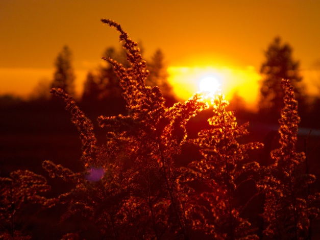 Photo: Golden sun lights up sky, clouds, and autumn plants. Photo by James Guilford.