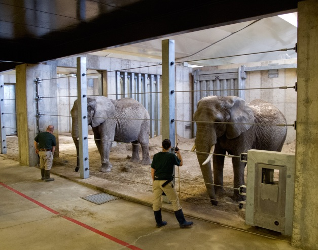 Photo: Elephants with keepers at Cleveland Metroparks Zoo. Photo by James Guilford