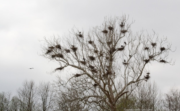 Photo: Heron Rookery in the Cuyahoga Valley National Park. Photo by James Guilford.