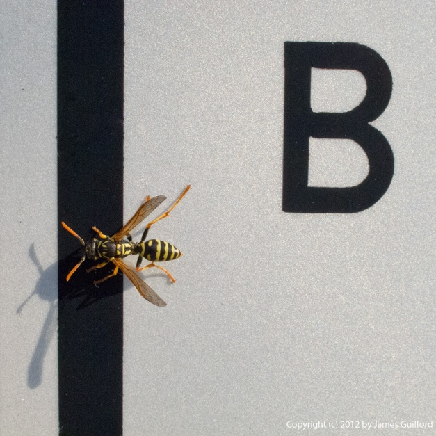Photo: Wasp posing on a street sign with the letter B