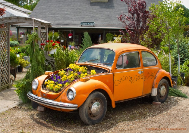 Photo: VW Beetle converted to flower bed. Photo by James Guilford.