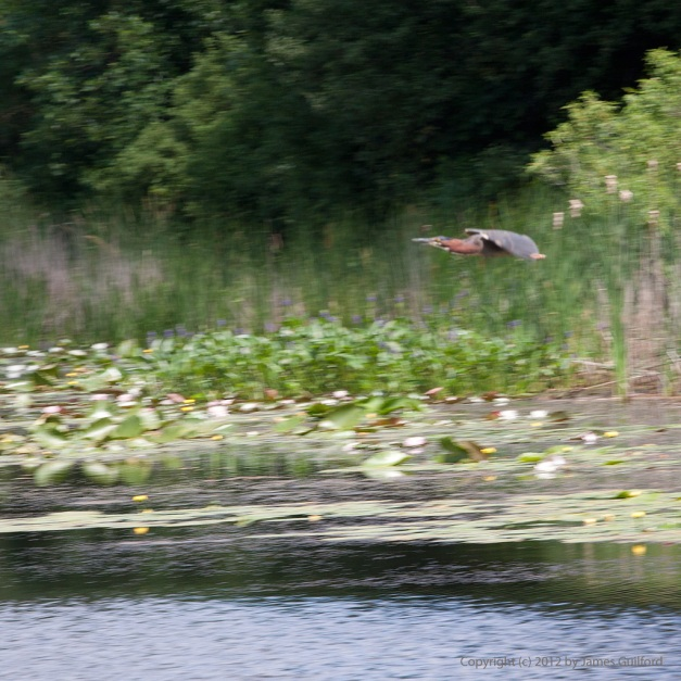 Photo: Motion-blurred shot of bird flying over water. Photo by James Guilford.