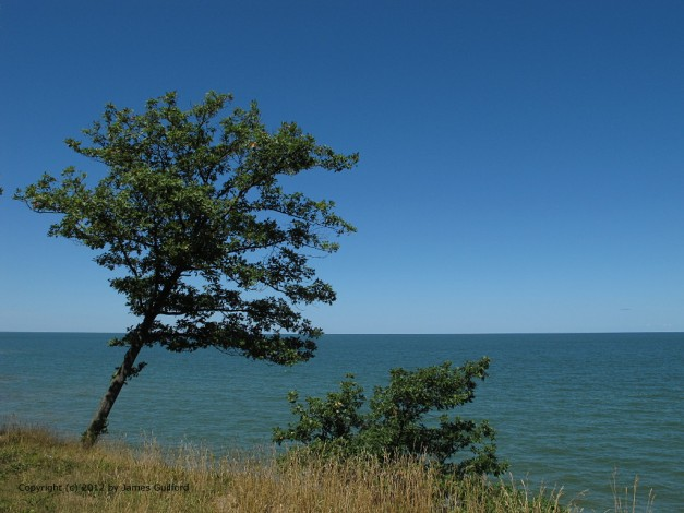 Photo: Trees clings to a cliff overlooking Lake Erie. Photo by James Guilford.