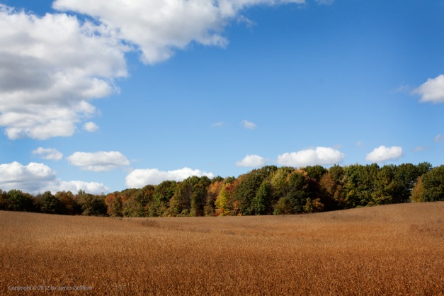 Photo: Field of ripe grain on a bright autumn day. Photo by James Guilford.