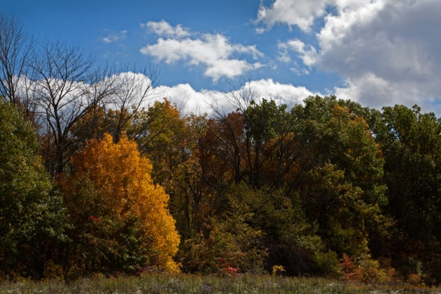 Photo: Brilliant fall colors on a tree. Photo by James Guilford.