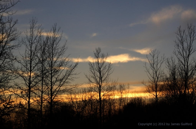 Photo: Trees bare of leaves against a sunset sky. Photo by James Guilford.