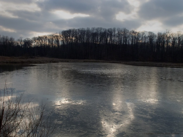 Photo: Thin ice forming on pond. Photo by James Guilford.