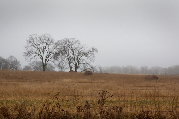 Photo: Landscape of a pasture in late autumn. Photo by James Guilford.