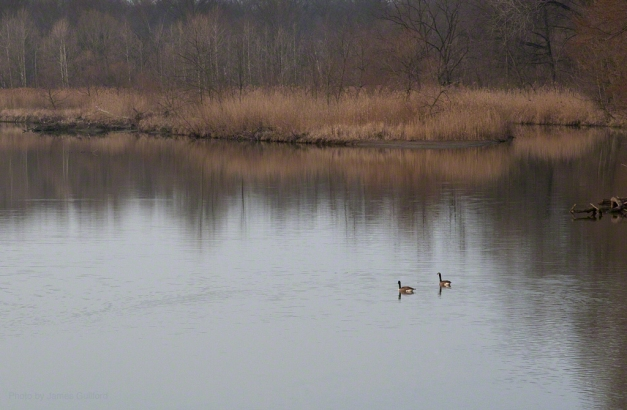Photo: Geese on a still lake. Photo by James Guilford.