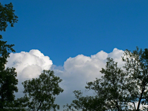 Photo: Mounds of Clouds Rising Above Trees. Photo by James Guilford.