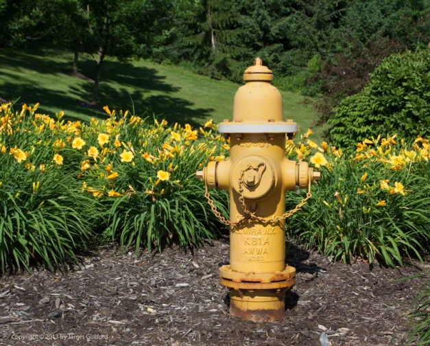 Photo: Yellow fire hydrant with yellow flowers. Photo by James Guilford.