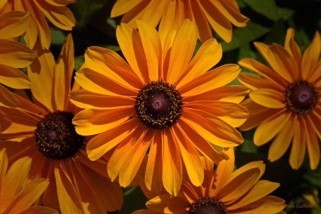 Photo: Brightly-colored flowers. Photo by James Guilford.