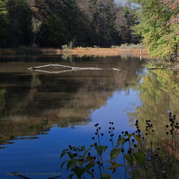Photo: Autumn scene at a lagoon. Photo by James Guilford