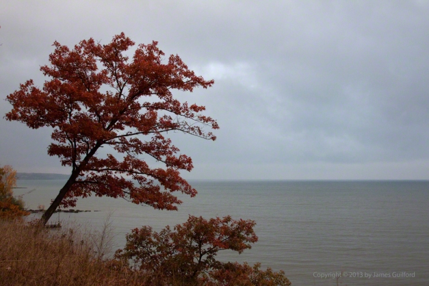 Photo: Red-leafed tree clinging to cliff. Photo by James Guilford.