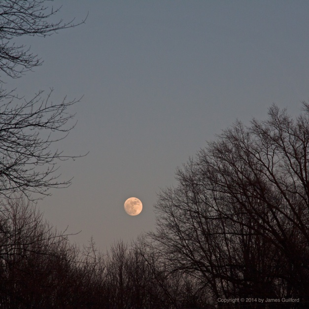 Photo: The Moon rises into the space between trees on a January evening. Photo by James Guilford.