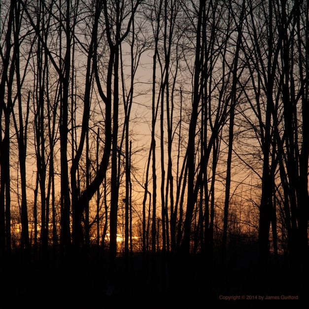 Photo: Sunset behind trees. Photo by James Guilford.
