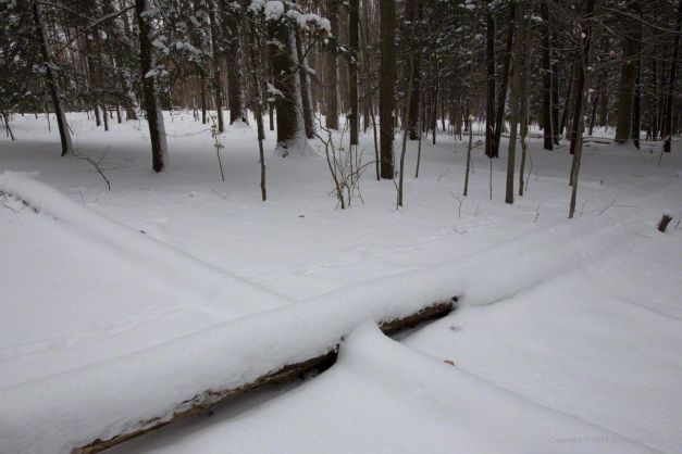 Photo: Crossed timbers on the ground in the woods. Photo by James Guilford.