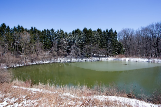 Photo: Pond at Summit MetroParks' Nature Realm. Photo by James Guilford.