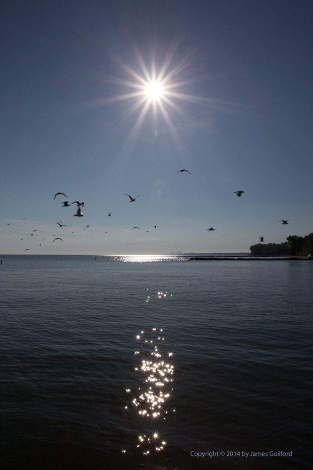 Photo: Sunburst over Lake Erie with Gulls in Flight.